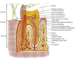 La diagnosi - Studio dentistico Dott. Mario Vaccarone Casale Monferrato
